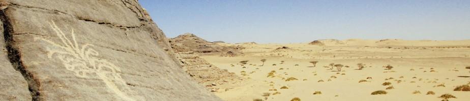 Gravure rupestre de palmier sur le Jabal Kawkab (région de Najrân, Arabie Saoudite). Cliché Mission archéologique franco-saoudienne à Najrân.