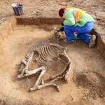 Theißen. L'une des trois sépultures de chevaux. © ZB. DR.