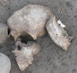 Restes humains retrouvés sur le site de fouilles archéologiques du Cailar (Gard), France.  © Fouille Programmée Le Cailar-UMR5140-ASM. Photo de presse.