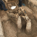 The horses were positioned fully upright, looking almost as if they were leaping upwards out of the grave. (PHOTO: MAP Archaeological Practice)