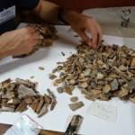 Recherche dans les caisses issues des fouilles des années 1970, au Musée d'archéologie nationale. Des milliers de restes osseux ont été triés et 47 nouveaux restes fossiles appartenant à l'enfant néandertalien « La Ferrassie 8 » ont été reconnus. © Antoine Balzeau – CNRS/MNHN. Photo service de presse.