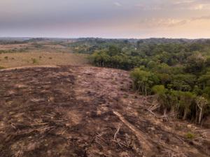 Vue aérienne de la déforestation  dans la forêt amazonienne pour  ouvrir des terres à l'agriculture Forêt nationale de Jamanxim, Para,  Brésil © Paralaxis. Photo de presse.jpg