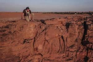 Un archéologue étudie l'un des dromadaires sculptés en taille réelle sur une paroi en grès du Camel Site. © Hubert RAGUET / Mission archéologique franco-saoudienne du Camel Site/CNRS Photothèque.